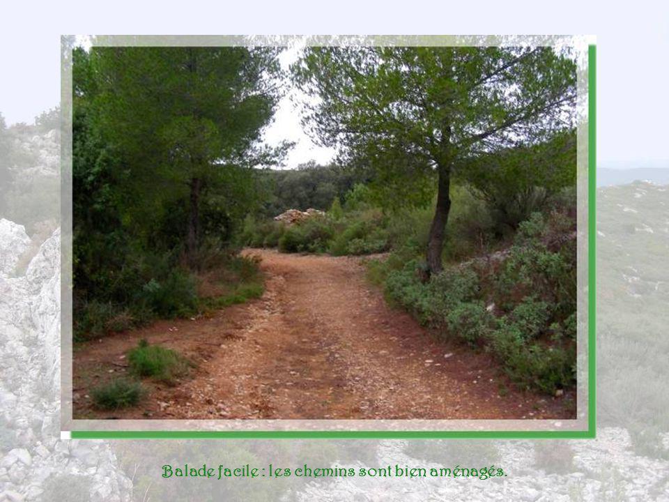 Balade facile : les chemins sont bien aménagés.