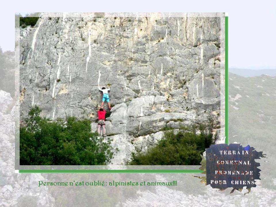 Personne n'est oublié : alpinistes et animaux!!!