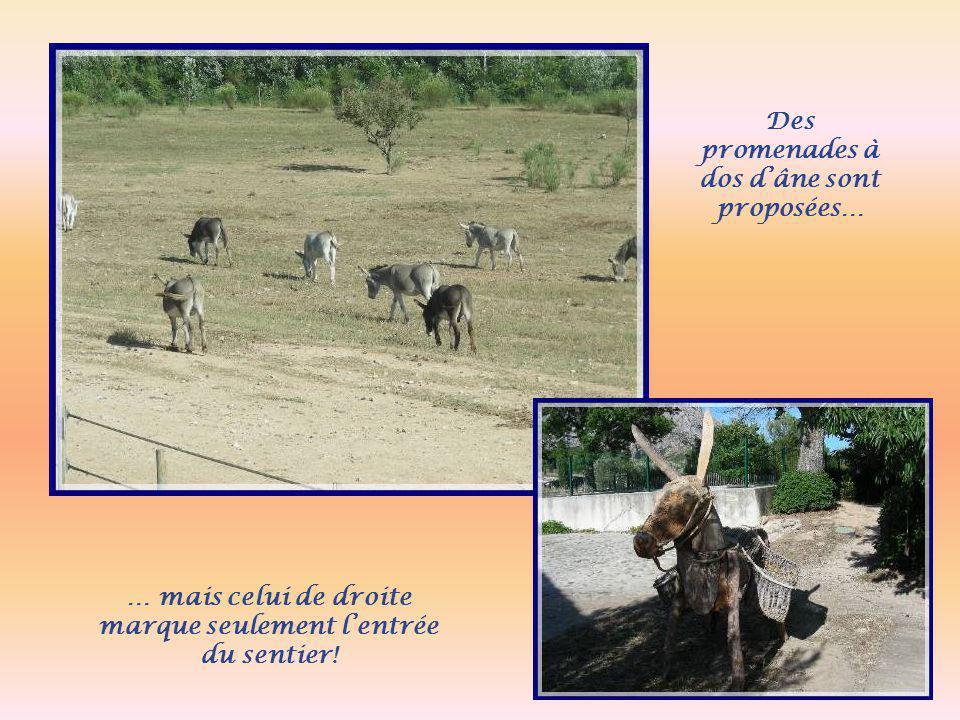 Des promenades à dos d'âne sont proposées…