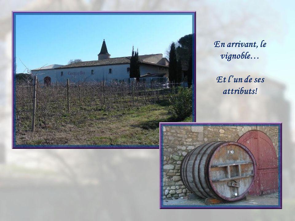 En arrivant, le vignoble… Et l'un de ses attributs!