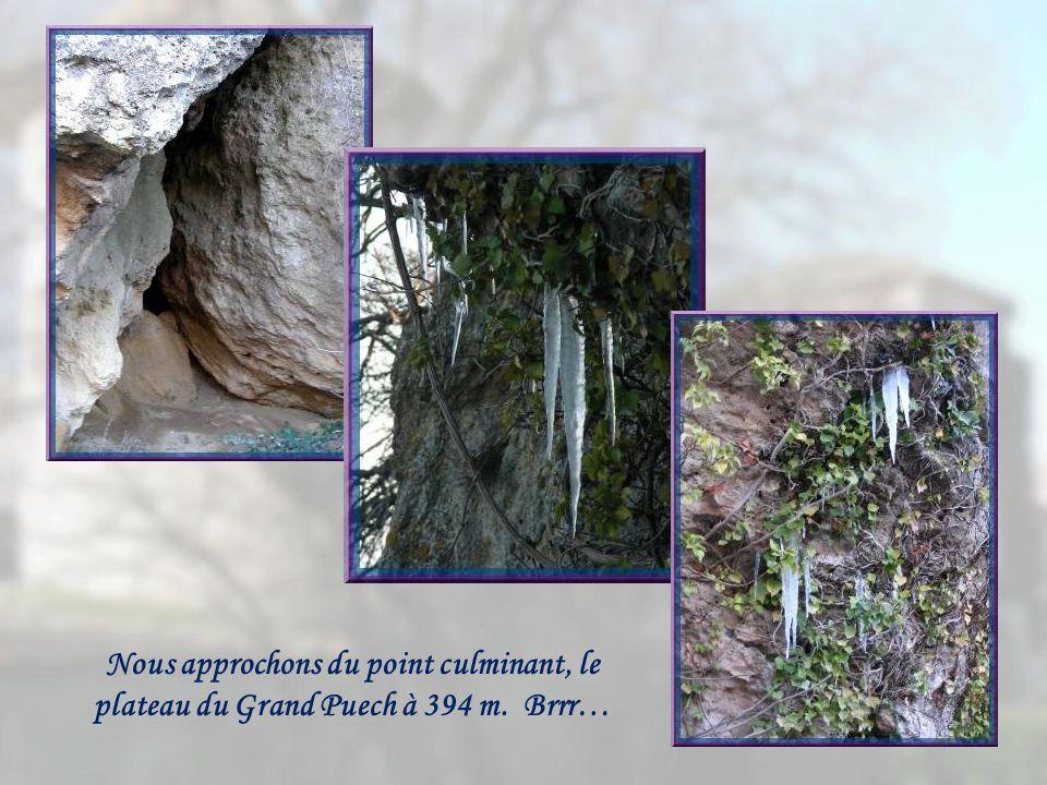 Nous approchons du point culminant, le plateau du Grand Puech à 394 m