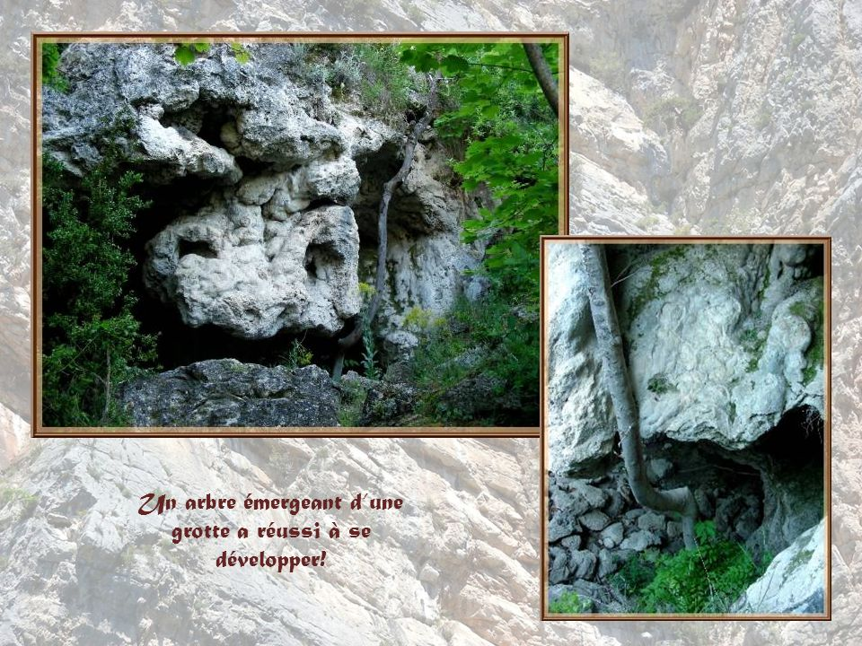 Un arbre émergeant d'une grotte a réussi à se développer!
