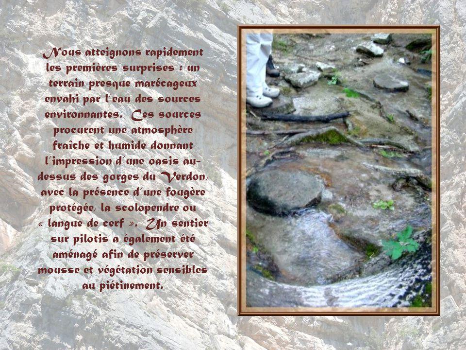 Nous atteignons rapidement les premières surprises : un terrain presque marécageux envahi par l'eau des sources environnantes.