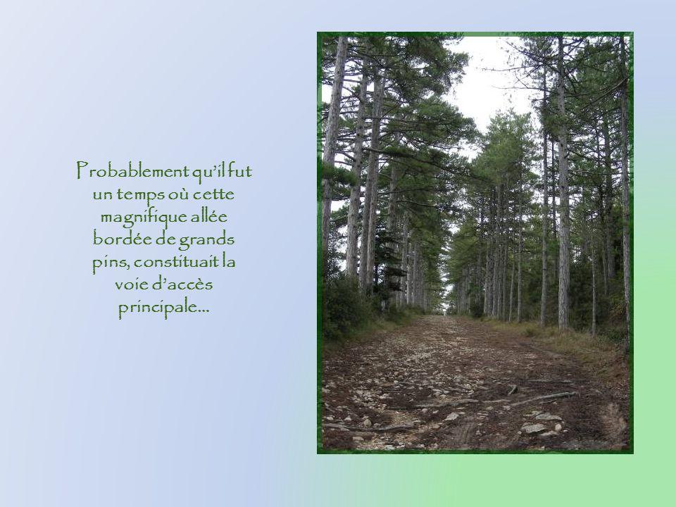 Probablement qu'il fut un temps où cette magnifique allée bordée de grands pins, constituait la voie d'accès principale…