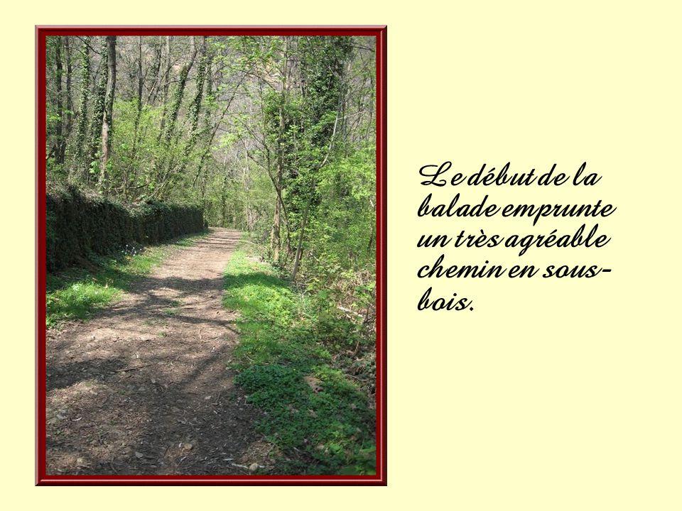 Le début de la balade emprunte un très agréable chemin en sous-bois.