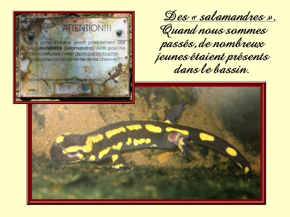 Des « salamandres ». Quand nous sommes passés, de nombreux jeunes étaient présents dans le bassin.