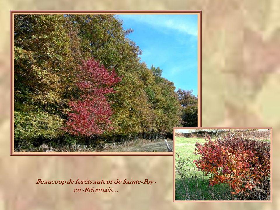 Beaucoup de forêts autour de Sainte-Foy-en-Brionnais…