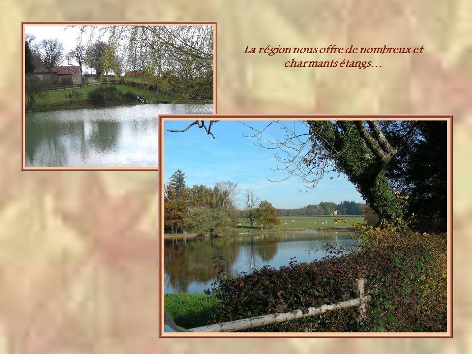 La région nous offre de nombreux et charmants étangs…