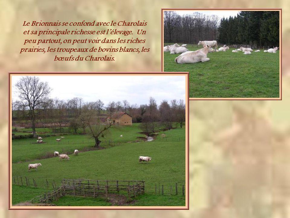 Le Brionnais se confond avec le Charolais et sa principale richesse est l'élevage.