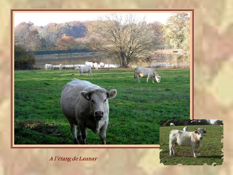 A l'étang de Launay