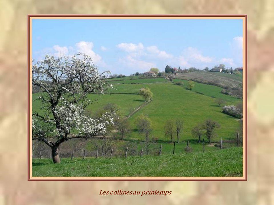 Les collines au printemps