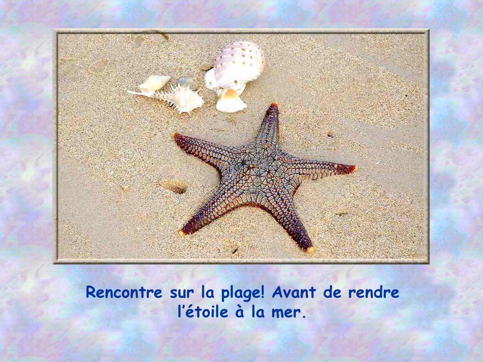 Rencontre sur la plage! Avant de rendre