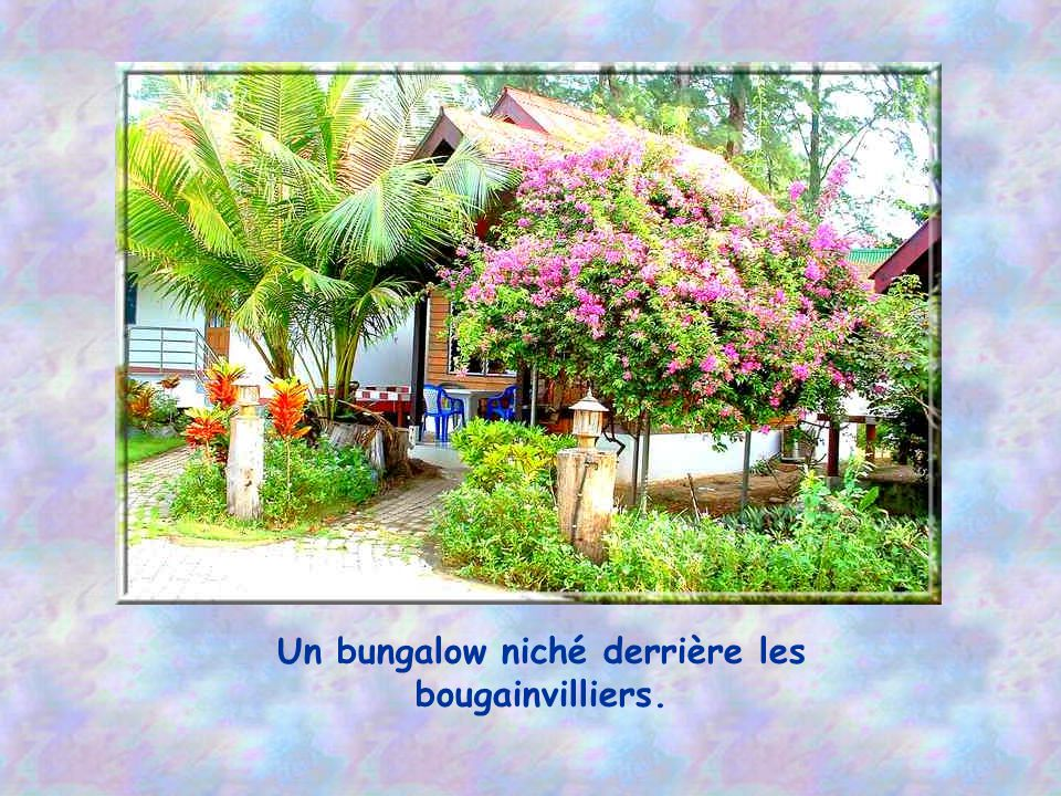 Un bungalow niché derrière les