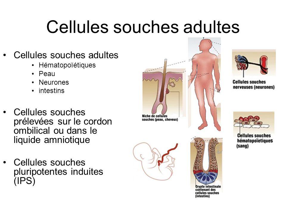 Cellules souches adultes