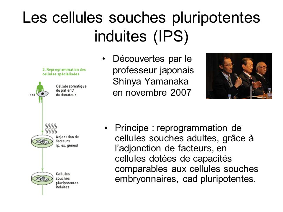 Les cellules souches pluripotentes induites (IPS)