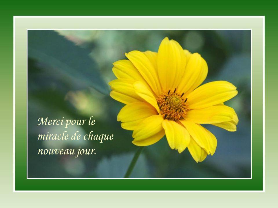 Merci pour le miracle de chaque nouveau jour.
