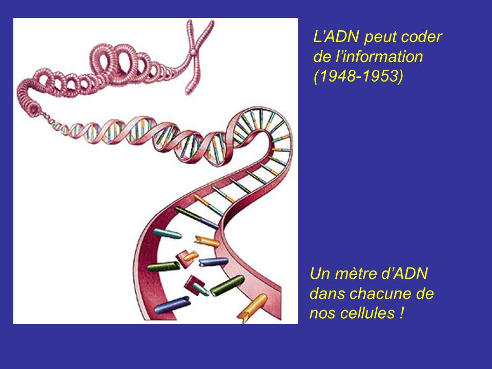 L'ADN peut coder de l'information
