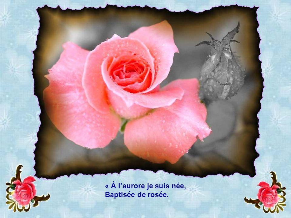 « À l'aurore je suis née, Baptisée de rosée.