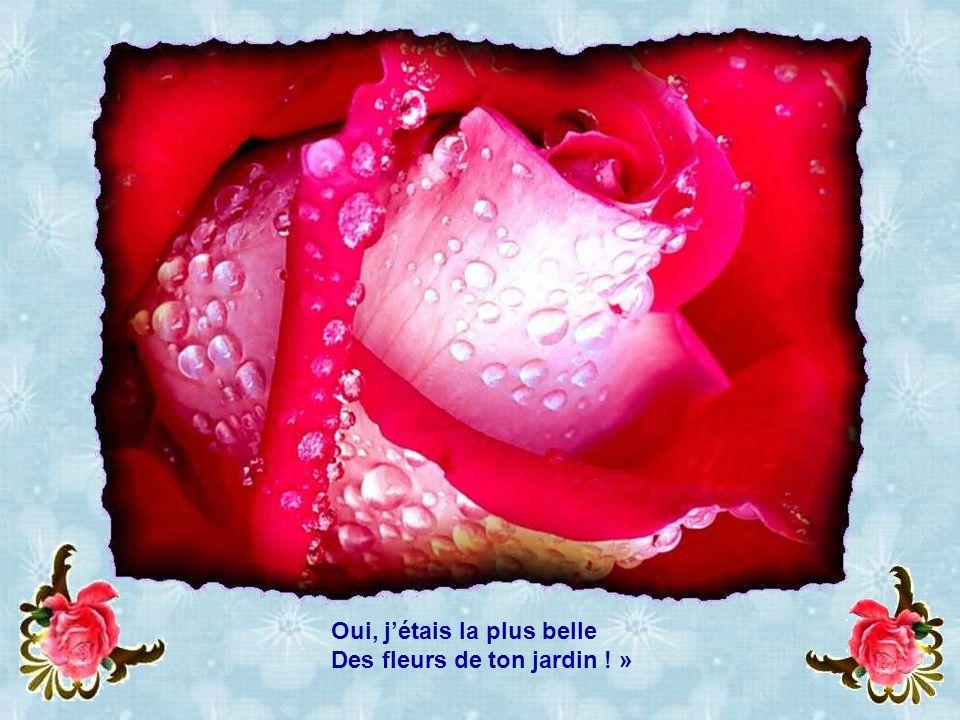 MON AMIE LA ROSE samedi 1er avril :53 Interprété par - ppt video ...