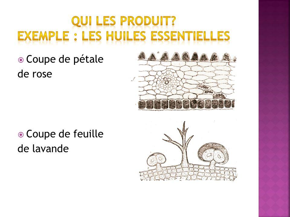 Qui les produit Exemple : les huiles essentielles