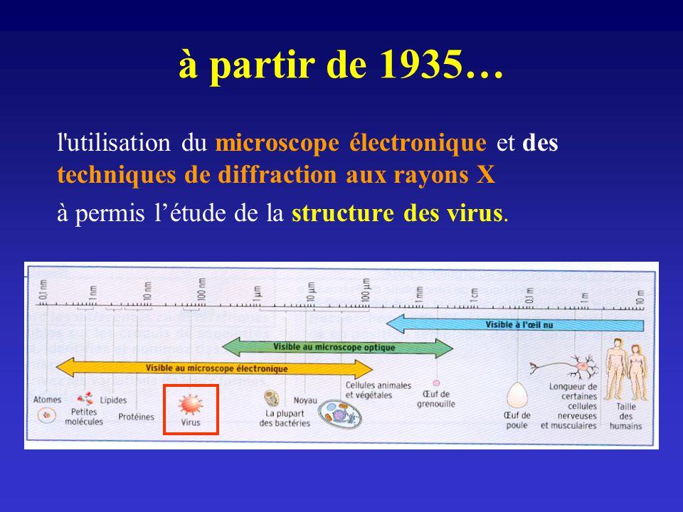 à partir de 1935… l utilisation du microscope électronique et des techniques de diffraction aux rayons X.