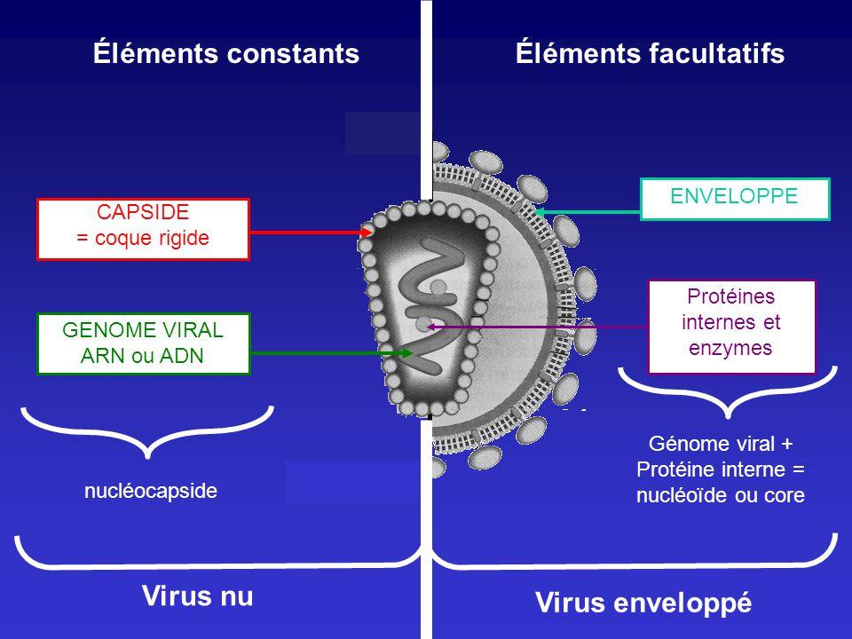 Virus nu Virus enveloppé