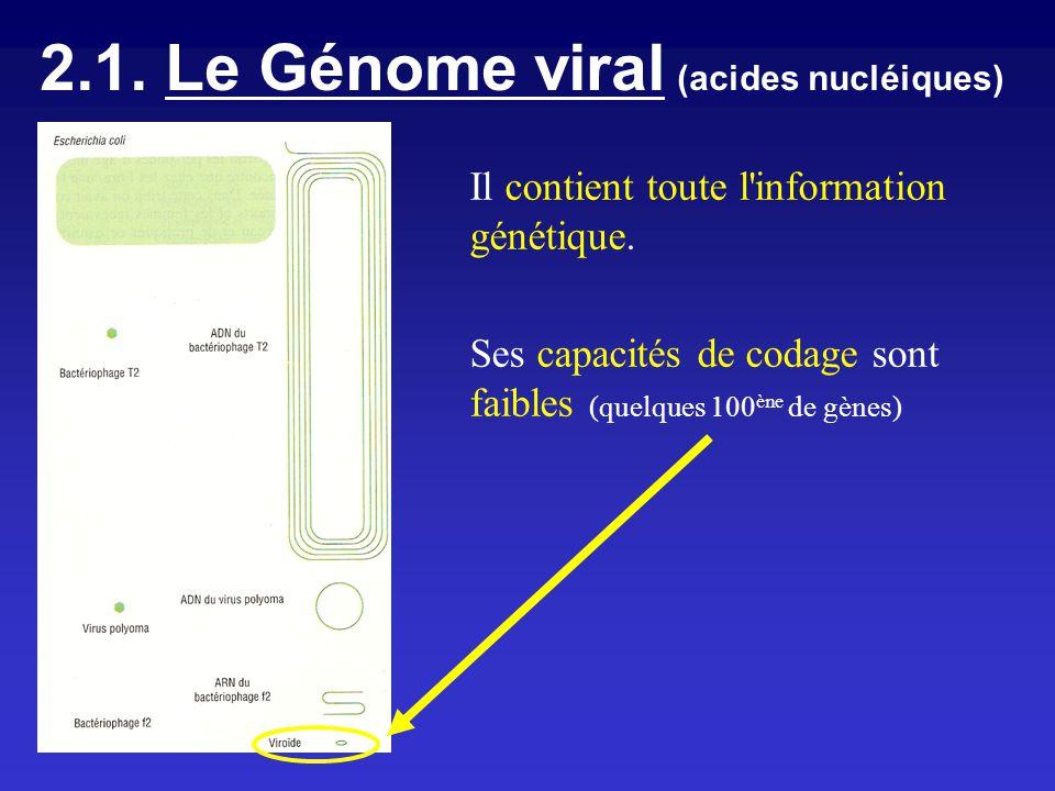 2.1. Le Génome viral (acides nucléiques)