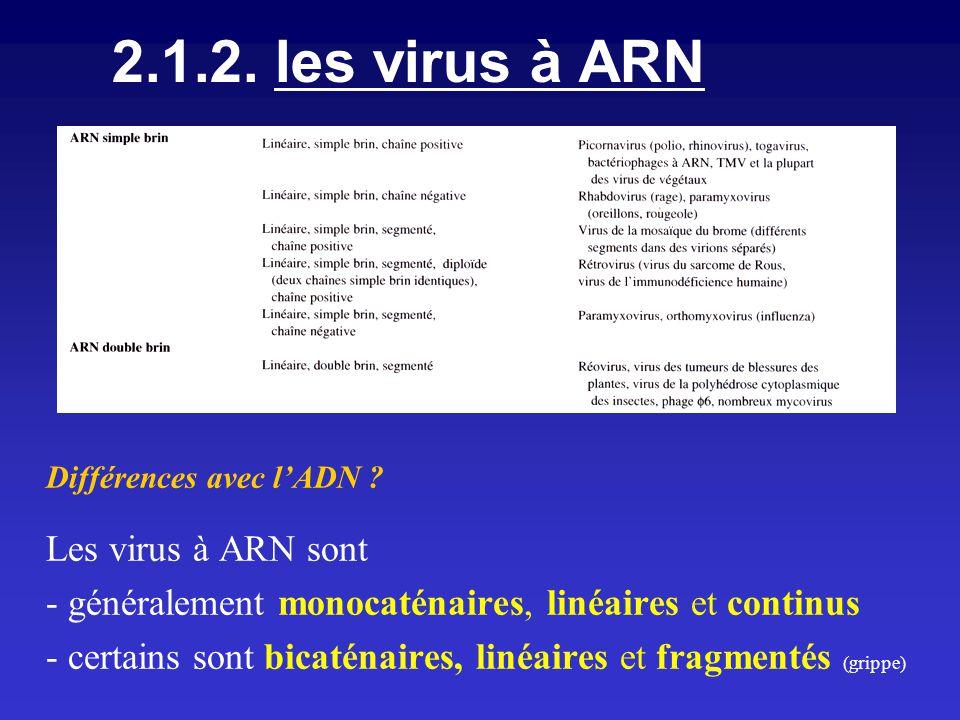 2.1.2. les virus à ARN Différences avec l'ADN Les virus à ARN sont