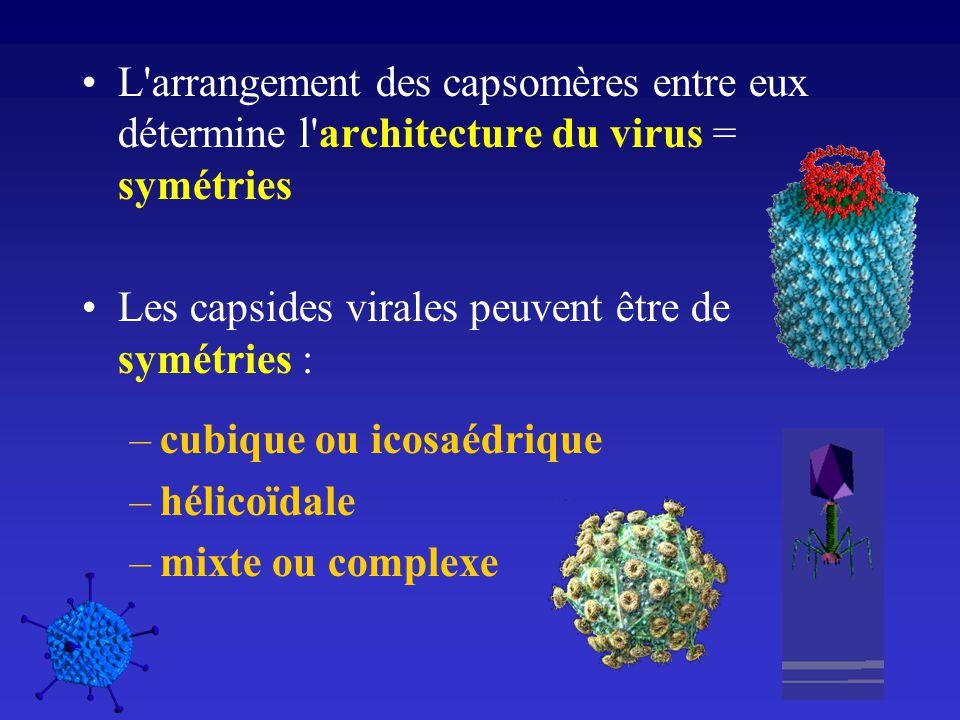 L arrangement des capsomères entre eux détermine l architecture du virus = symétries