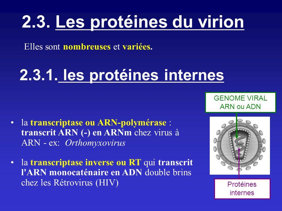 2.3. Les protéines du virion