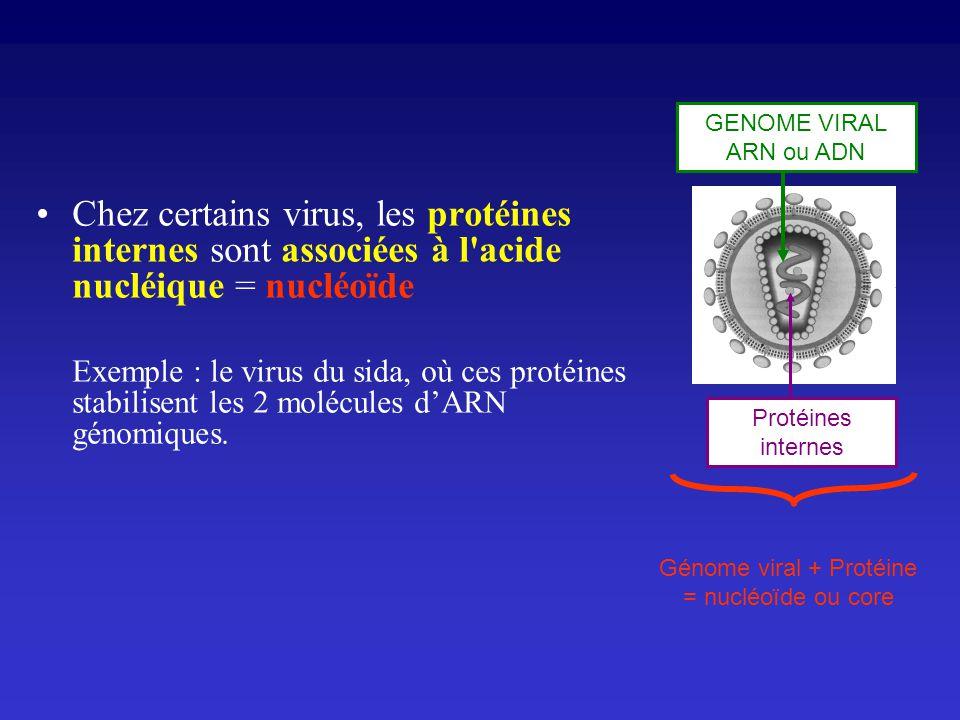 Génome viral + Protéine = nucléoïde ou core