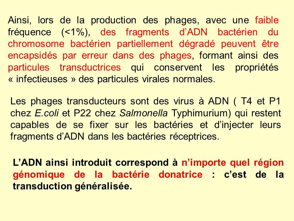 Ainsi, lors de la production des phages, avec une faible fréquence (<1%), des fragments d'ADN bactérien du chromosome bactérien partiellement dégradé peuvent être encapsidés par erreur dans des phages, formant ainsi des particules transductrices qui conservent les propriétés « infectieuses » des particules virales normales.