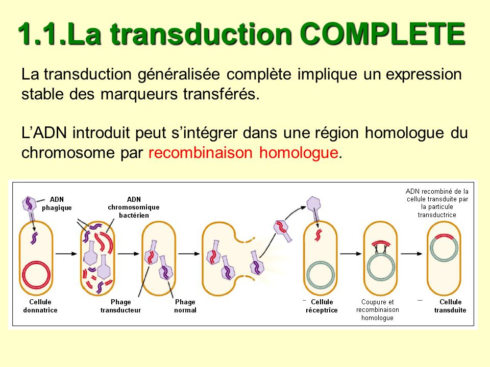 1.1.La transduction COMPLETE