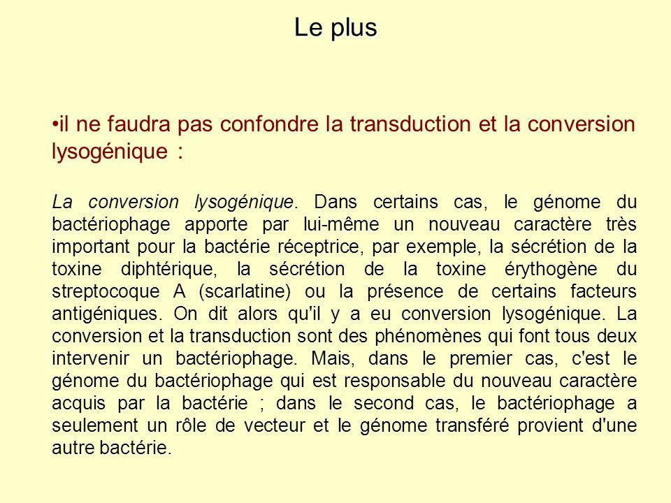 Le plus il ne faudra pas confondre la transduction et la conversion lysogénique :