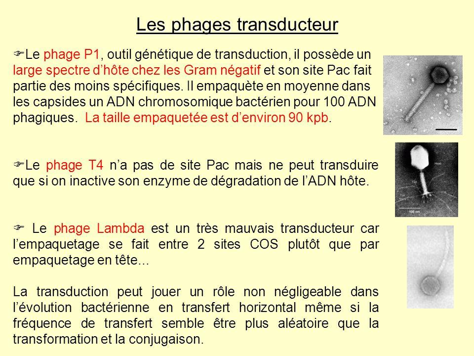 Les phages transducteur