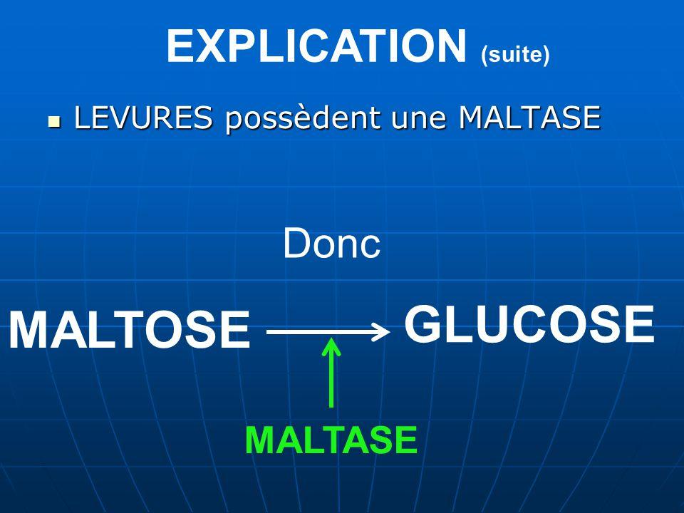 GLUCOSE MALTOSE EXPLICATION (suite) Donc MALTASE