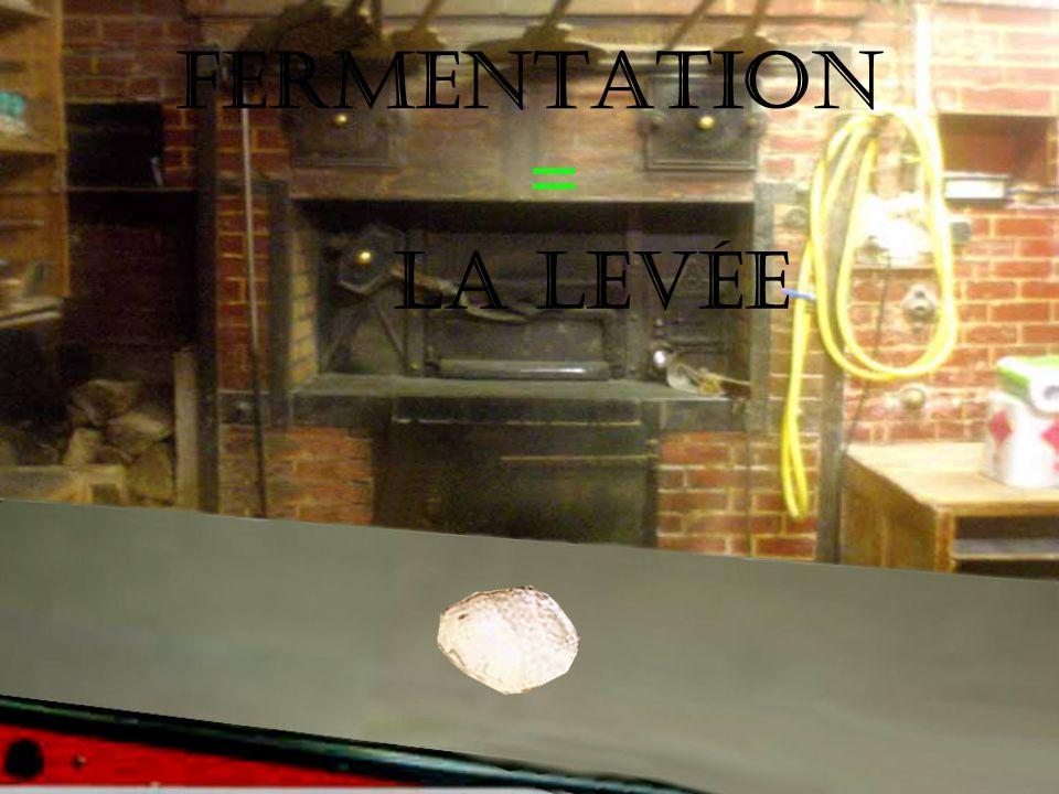 FERMENTATION = La levée
