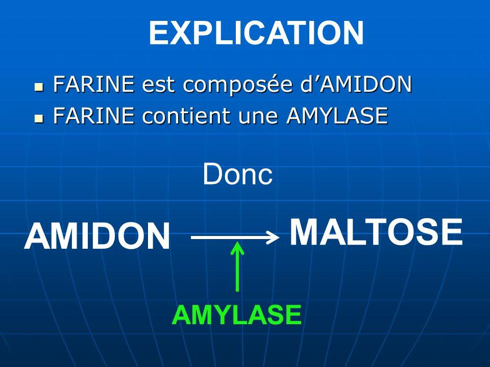 MALTOSE AMIDON EXPLICATION Donc AMYLASE FARINE est composée d'AMIDON