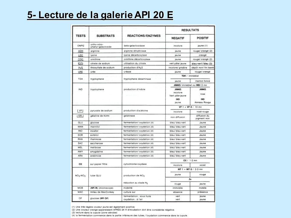 5- Lecture de la galerie API 20 E