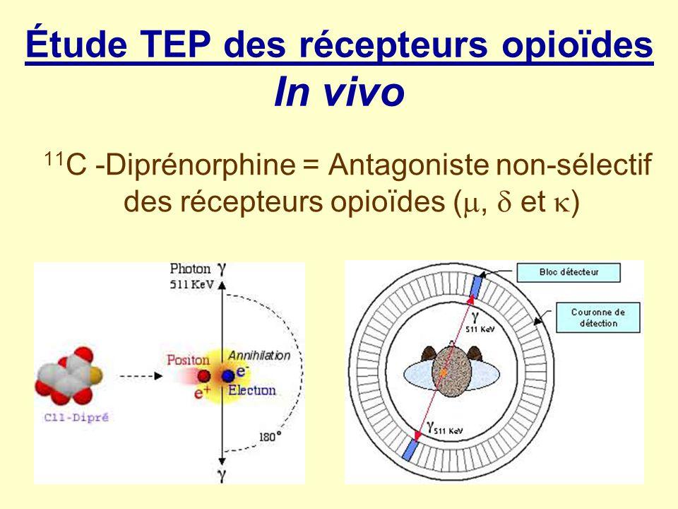 Étude TEP des récepteurs opioïdes In vivo