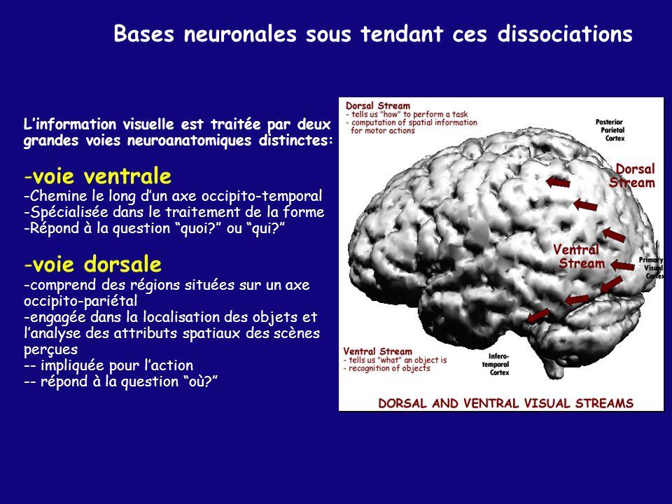 Bases neuronales sous tendant ces dissociations
