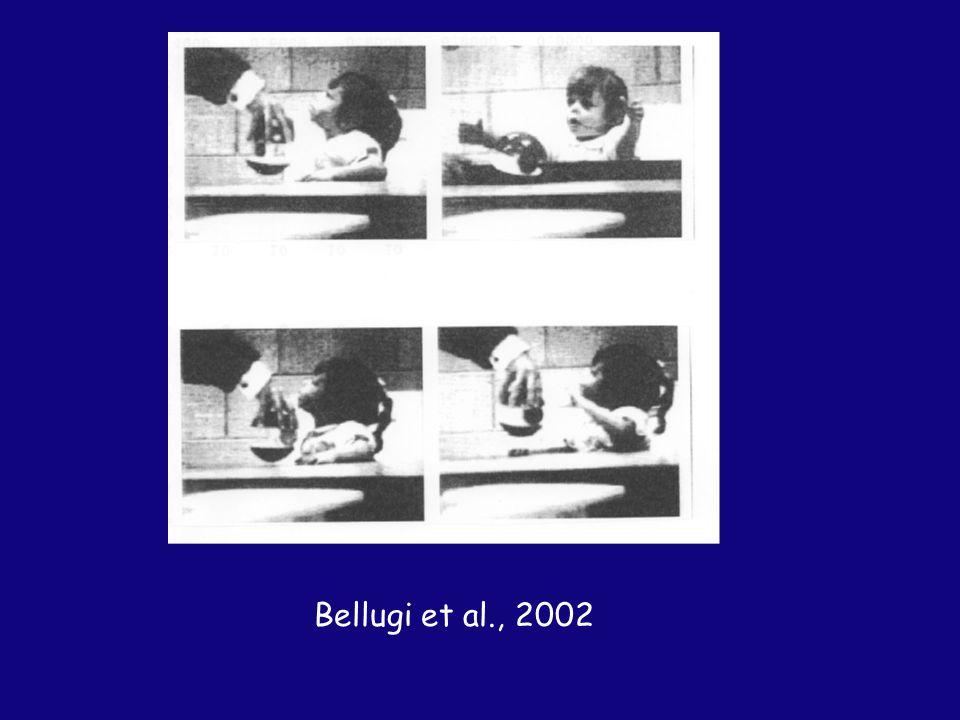 Bellugi et al., 2002