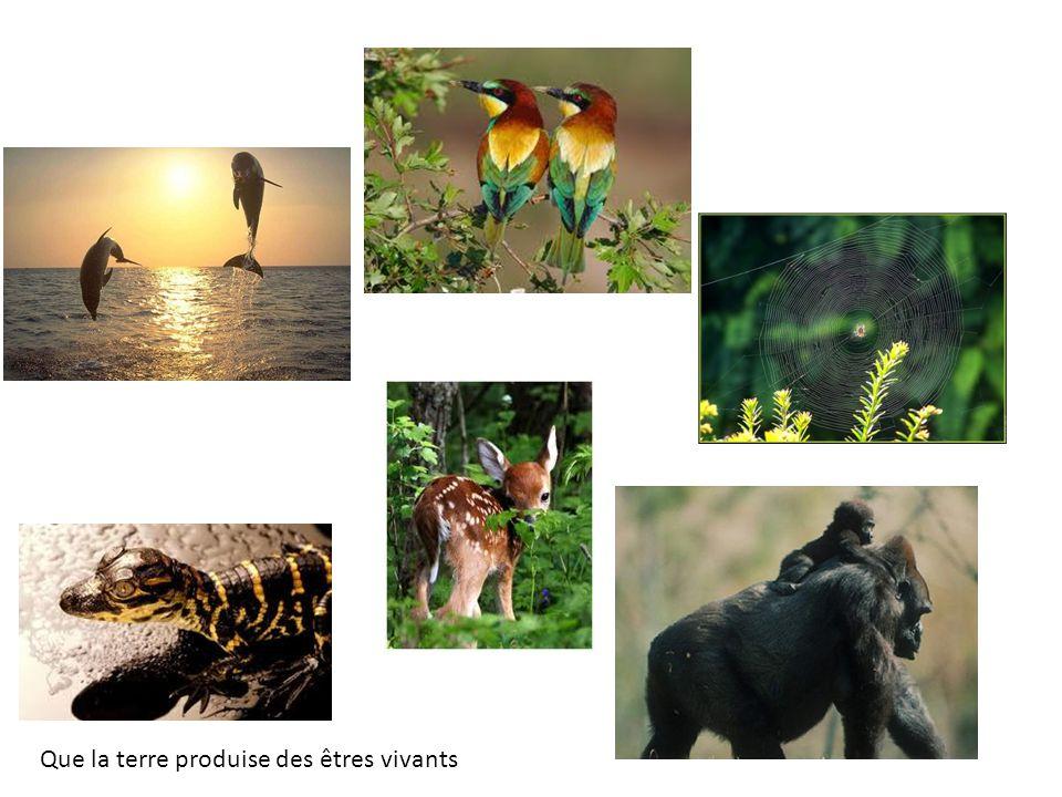 Que la terre produise des êtres vivants