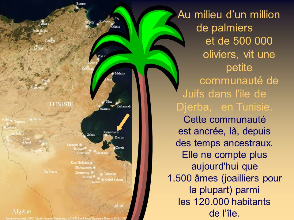 Au milieu d'un million de palmiers. et de 500 000. oliviers, vit une