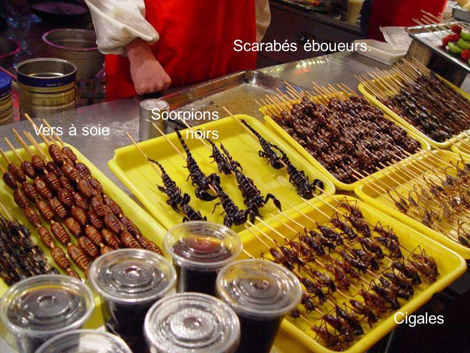 Scarabés éboueurs. Scorpions noirs Vers à soie Cigales