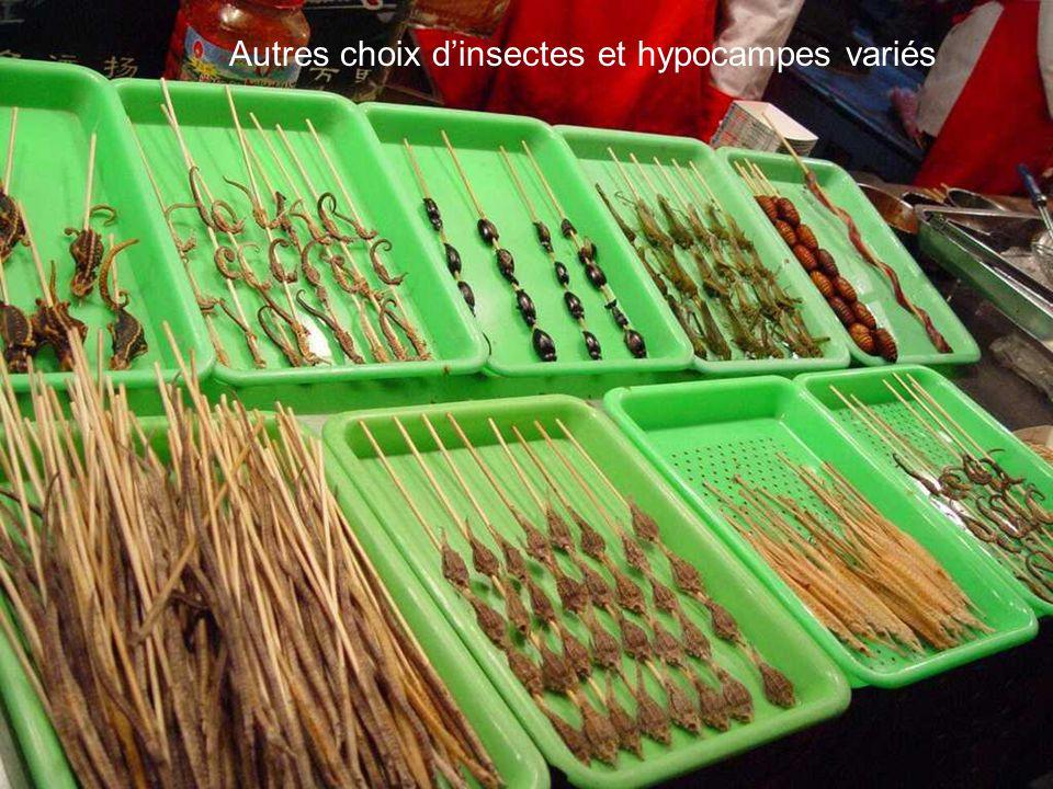 Autres choix d'insectes et hypocampes variés