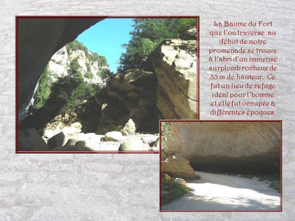 La Baume du Fort que l'on traverse au début de notre promenade se trouve à l'abri d'un immense surplomb rocheux de 35 m de hauteur.