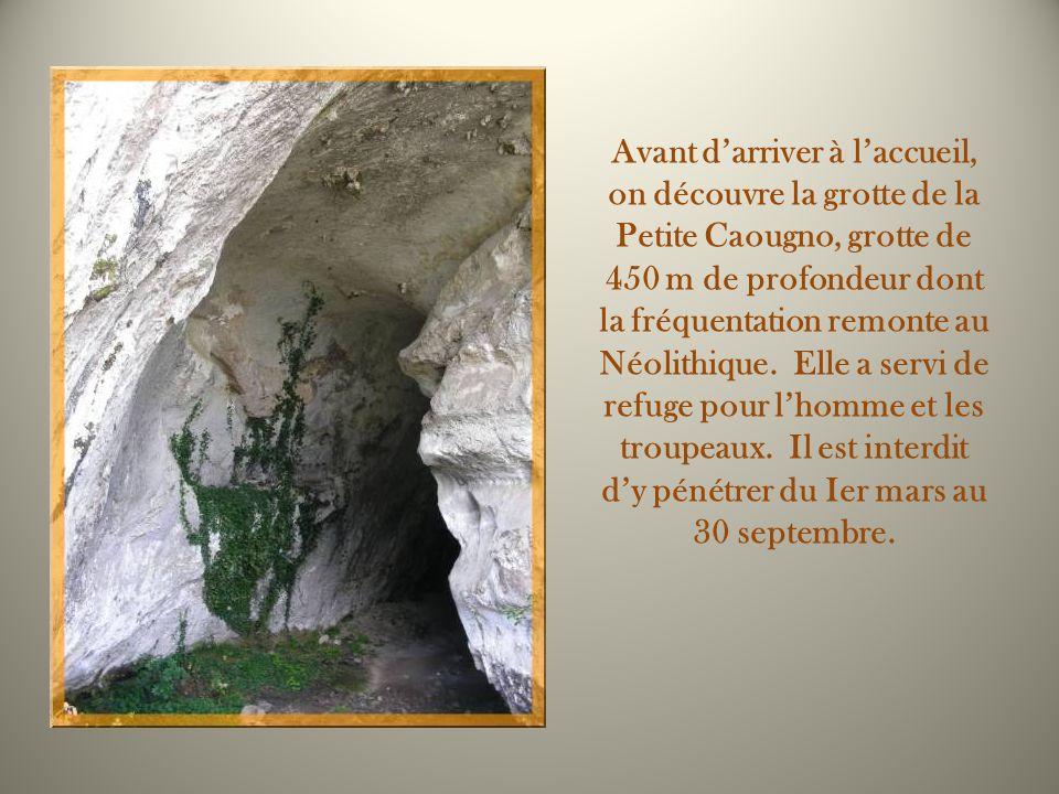 Avant d'arriver à l'accueil, on découvre la grotte de la Petite Caougno, grotte de 450 m de profondeur dont la fréquentation remonte au Néolithique. Elle a servi de refuge pour l'homme et les troupeaux. Il est interdit d'y pénétrer du Ier mars au