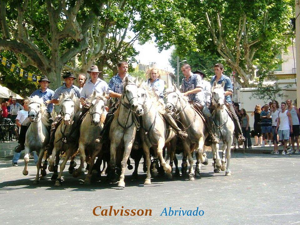 Calvisson Abrivado