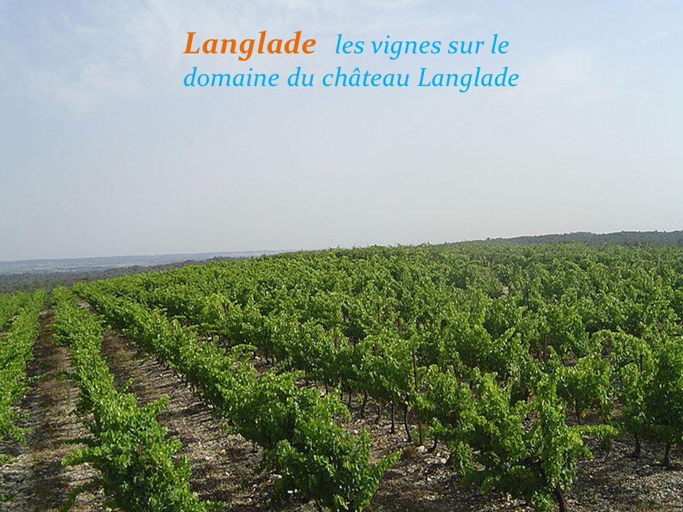 Langlade les vignes sur le domaine du château Langlade